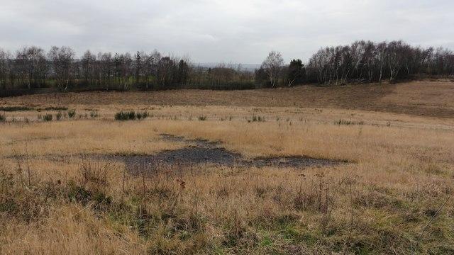 Grassmoor Country Park (Grassmoor Lagoons)