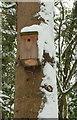 SX9064 : Nesting box near Torre Station by Derek Harper