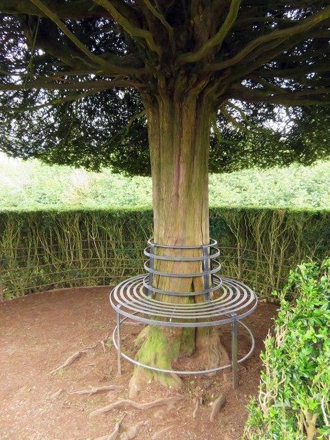 A bench in the Yew Garden
