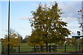 TL4558 : Tree, Midsummer Common by N Chadwick