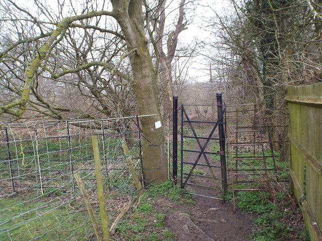 Path through Upper Beechen Wood, near Eynsford