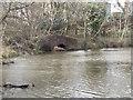 SM9618 : Withybush Woods Bridge by welshbabe