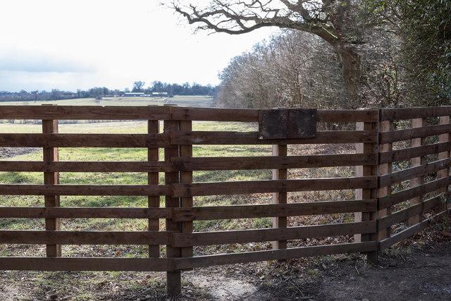 Fence on Edge of Williams Wood, Trent Park