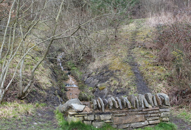 Stream above cycle track, Penallta Country Park