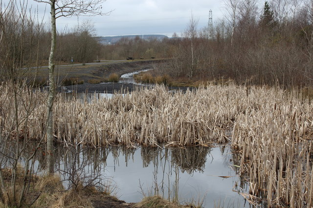 Pond near cycle route, Penallta Country Park