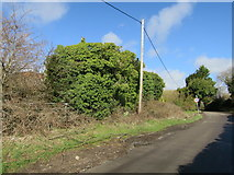 TQ8115 : Derelict Oast House at Moor Farm, Stonestile Road, Westfield by Oast House Archive