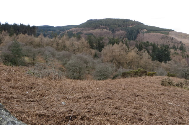 Ladstock wood