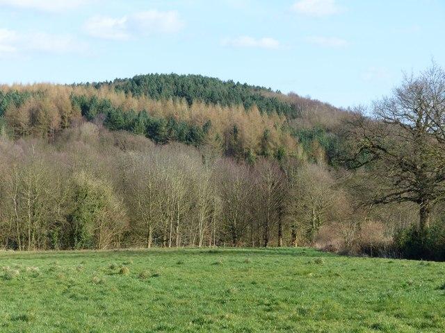 Monk Wood