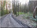 SK3576 : Junction in Monk Wood by Dave Dunford