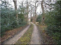 TL9094 : Track in Waterhouse Plantation, Tottington by David Howard