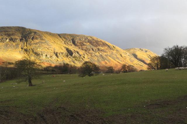 Sheep grazing with Barton Fell beyond