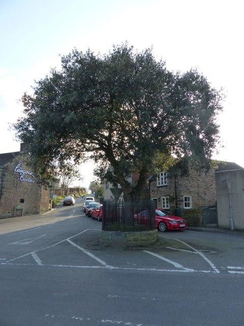 Coronation memorial tree