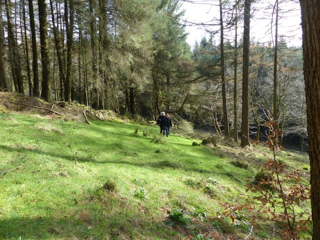 In Macclesfield Forest