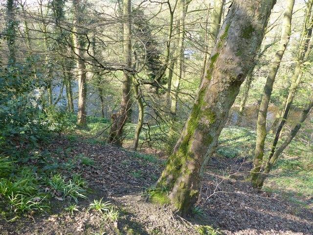Goyt through trees