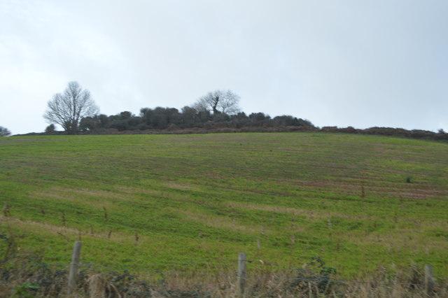 Hilltop bushes