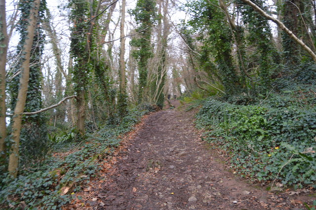 South West Coast path, Marridge Wood