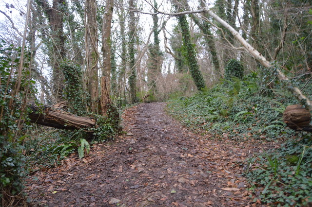 South West Coast Path, Marridge Wood