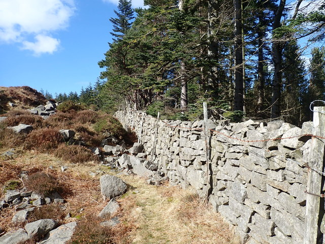 Mountain wall separating Donard Wood from the open mountain