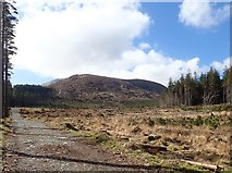 J3629 : Clear cut forest at the foot of Shan Slieve Mountain by Eric Jones