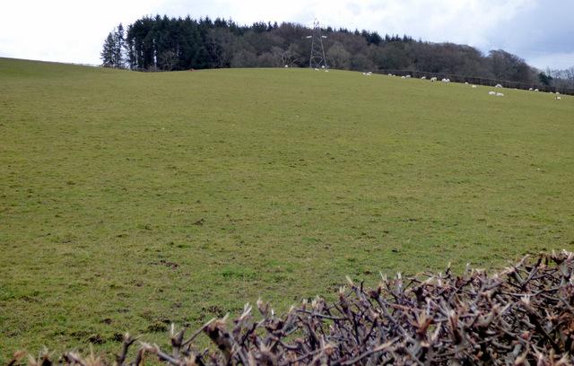 Woodland near Formakin