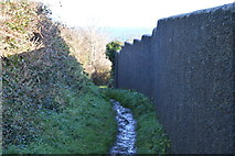 SX9463 : South West Coast Path (Bishop's Walk) by N Chadwick