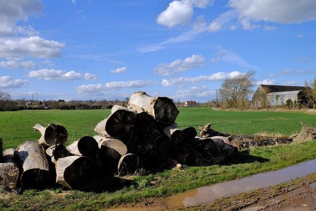 Big firewood