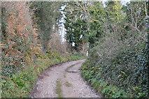 SX9268 : South West Coast Path by N Chadwick