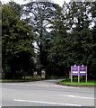 SO8005 : Evergreen trees at the entrance to Stonehouse Court Hotel, Stonehouse by Jaggery