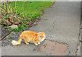 ST5874 : Cotham cat by Derek Harper