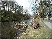 NY2623 : Fallen tree, Fitz Park, Keswick by Christine Johnstone