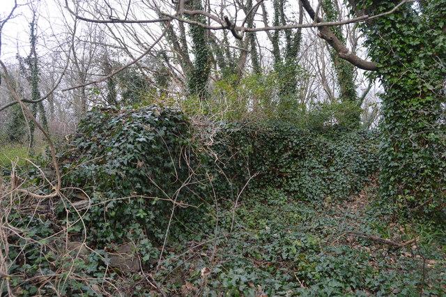 Ivy clad quarry