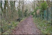 SX9157 : South West Coast Path by N Chadwick