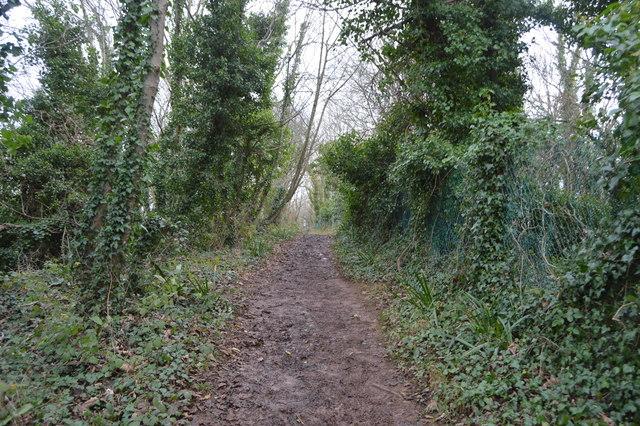 South West Coast Path, The Grove