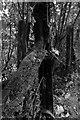 SO5615 : Rail section fenceposts near Symonds Yat by John Winder