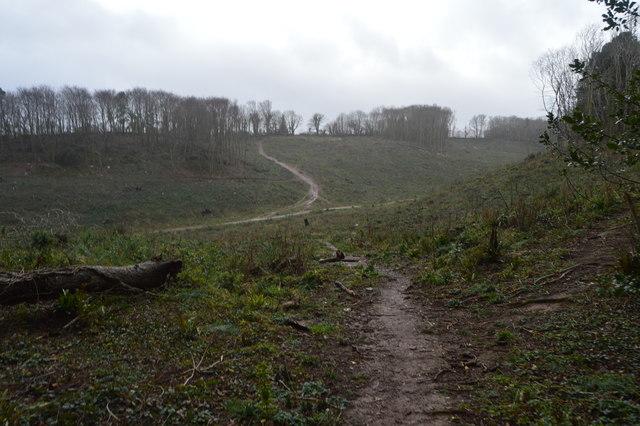 Clearfelled area, The Grove