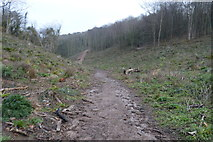 SX9156 : Path, The Grove by N Chadwick
