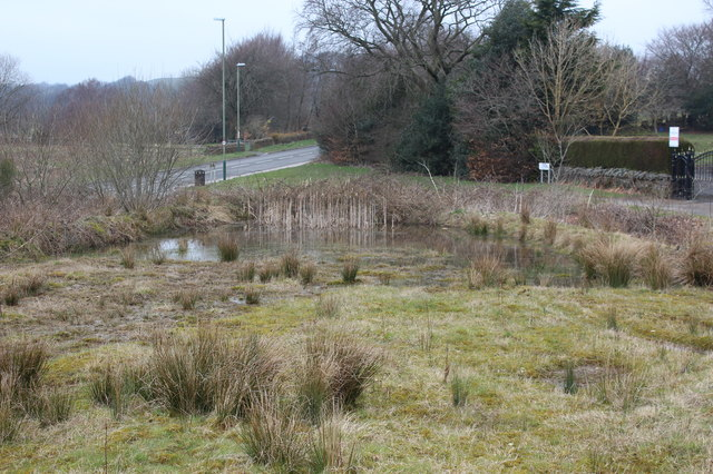 Pond off Parkway