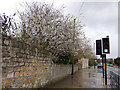 SE4843 : Blossom alongside Station Road, Tadcaster by Stephen Craven
