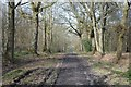 SO9581 : Path through Uffmoor Wood by Philip Halling