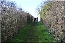 SX9370 : Footpath to Teignmouth Rd by N Chadwick