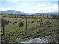 NY1736 : Fenced rough grazing, alongside the Threapland road by Christine Johnstone