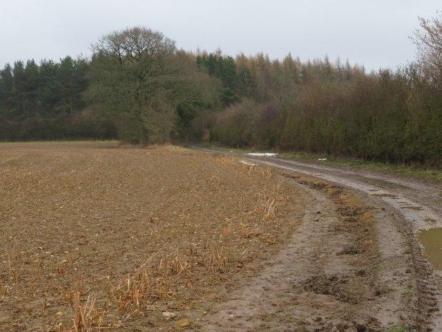 Farm track by Jeffery's Copse by Sandy B