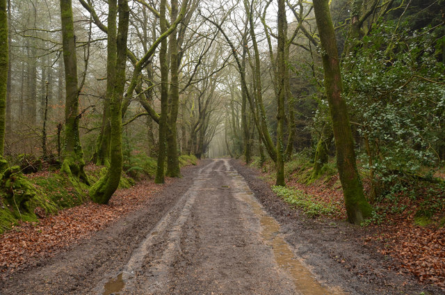 Public Byway on Beacon Hill, East Devon