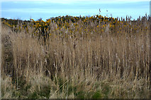 SZ3394 : New Forest : Lymington and Keyhaven Marshes Nature Reserve by Lewis Clarke