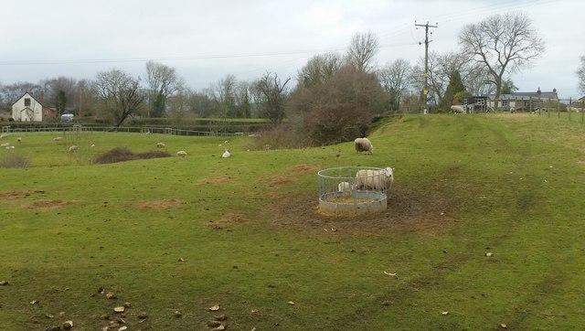 Sheep and lambs at Howle Hill