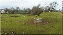SO6020 : Sheep and lambs at Howle Hill by Jonathan Billinger