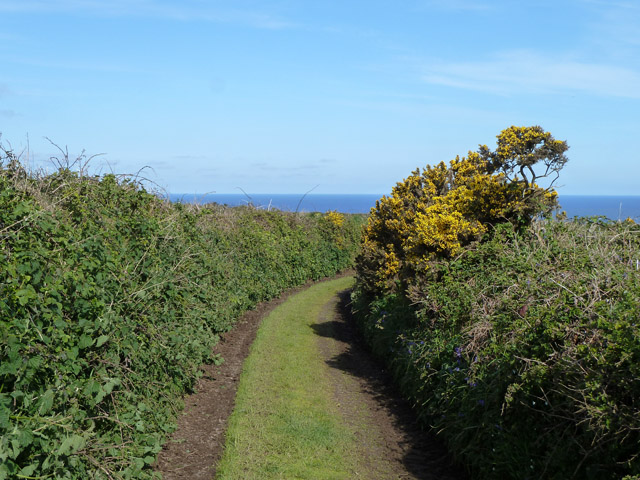 Green lane towards the sea