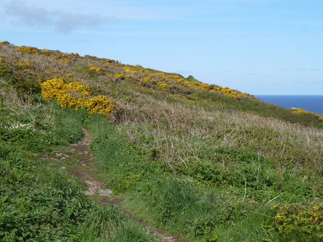 Coastal path, Hellesveor Cliff