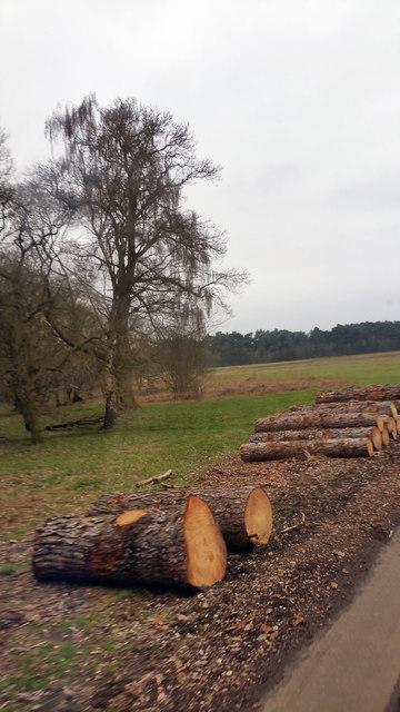 Wood on the edge of woodland