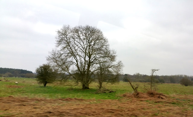 """Rough pasture south of """"Eastmere"""""""